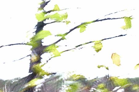 Fallendes Grün, 2015
